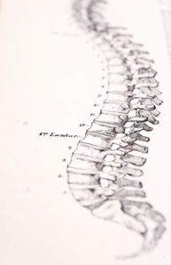 Illustration of human spine; consider the importance of maintenance
